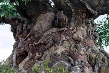 فیلم عجیب ترین درخت دنیا را از نزدیک ببینید