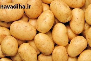تولید سیب زمینی تراریخته در دستور کار پژوهشگاه بیوتکنولوژی کشاورزی قرار گرفت