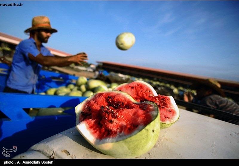 صرف ۲۸۶ لیتر آب برای تولید هر کیلو هندوانه در ایران