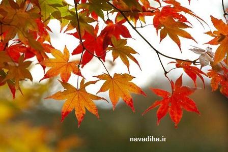 توصیه های طب سنتی برای پاییز