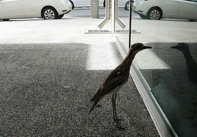 پرنده خودشیفته ستاره شبکه های اجتماعی شد