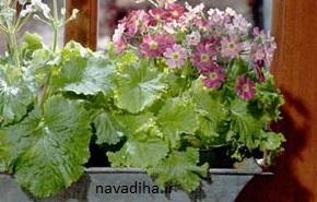 دانستنیهای لازم پیش از خرید گلهای آپارتمانی