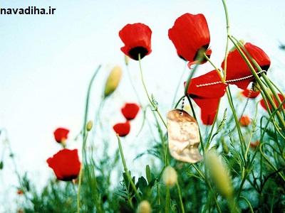 حجت_الاسلام_حسینی:روایت تکان دهنده برخورد پیامبر اسلام با پسری که مادرش را به دوش می کشید