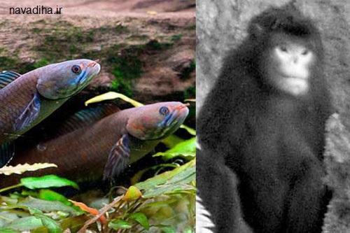 عکس بسیار عجیب از میمون و ماهی