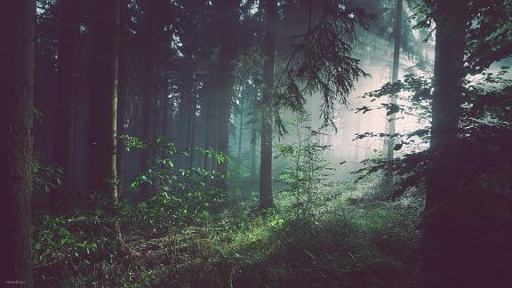 تک عکس زیبا از وسط جنگل و نور آفتاب – wide hd 1080
