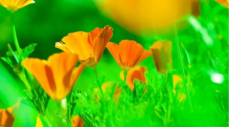 دانلود والپیپر زیبا از گل ها با کیفیت بسیار بالا – واید اچ دی ۴k