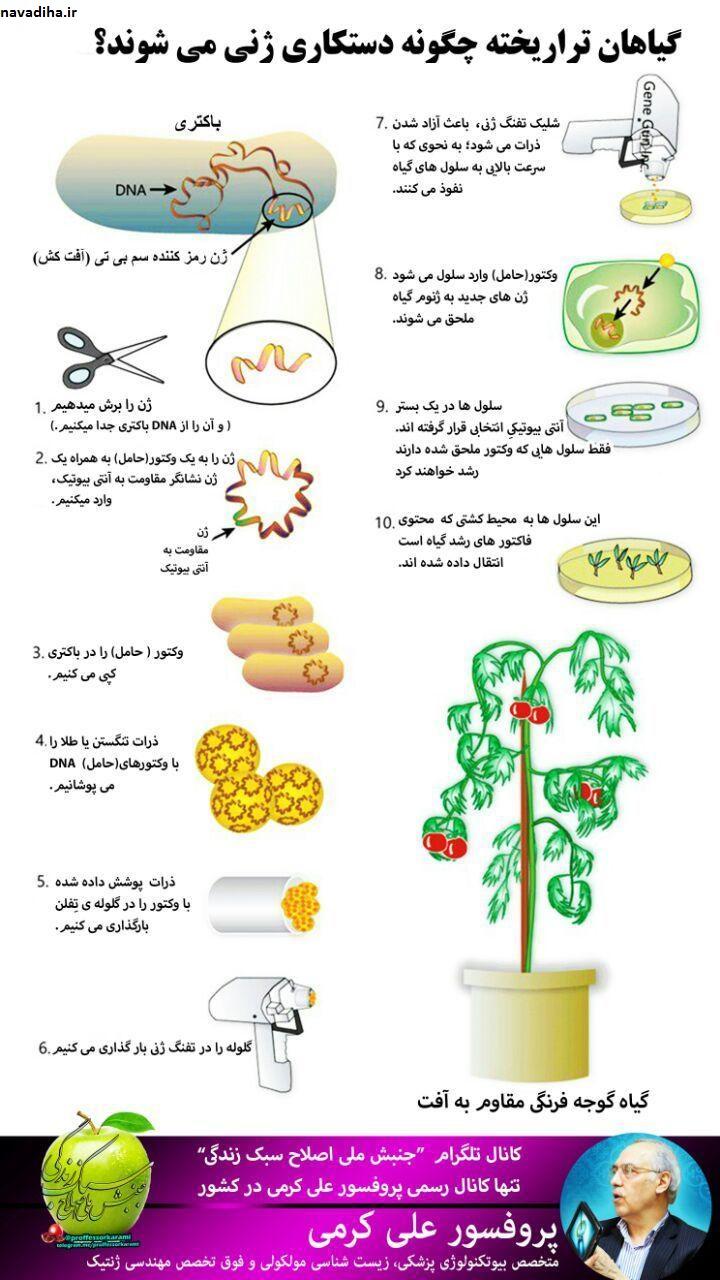 روش تهیه گیاه تراریخته یا دستکاری ژنتیکی شده GMO