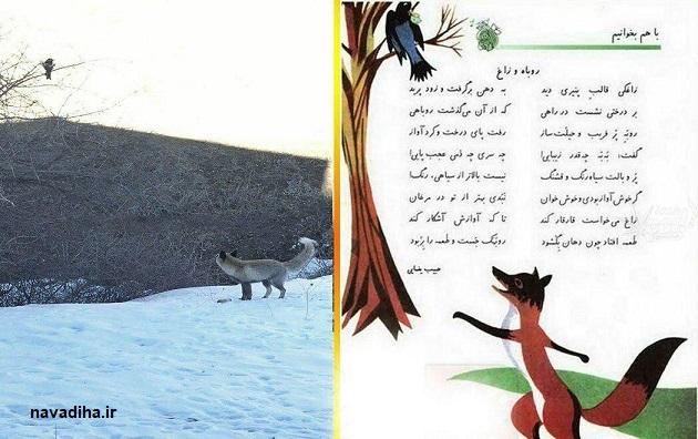 عکس/زاغ و روباه کتاب قدیمی فارسی به واقعیت پیوست!